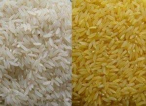 Farmers feel that the Agrochemical Corporations and the United States of America are behind the push for the adoption of golden rice and other GMOs. Golden rice is genetically modified with genes coming from bacteria and corn to produce beta carotene. Previously golden rice was scrapped because it didn't work, and has only recently come back up through a testing phase.