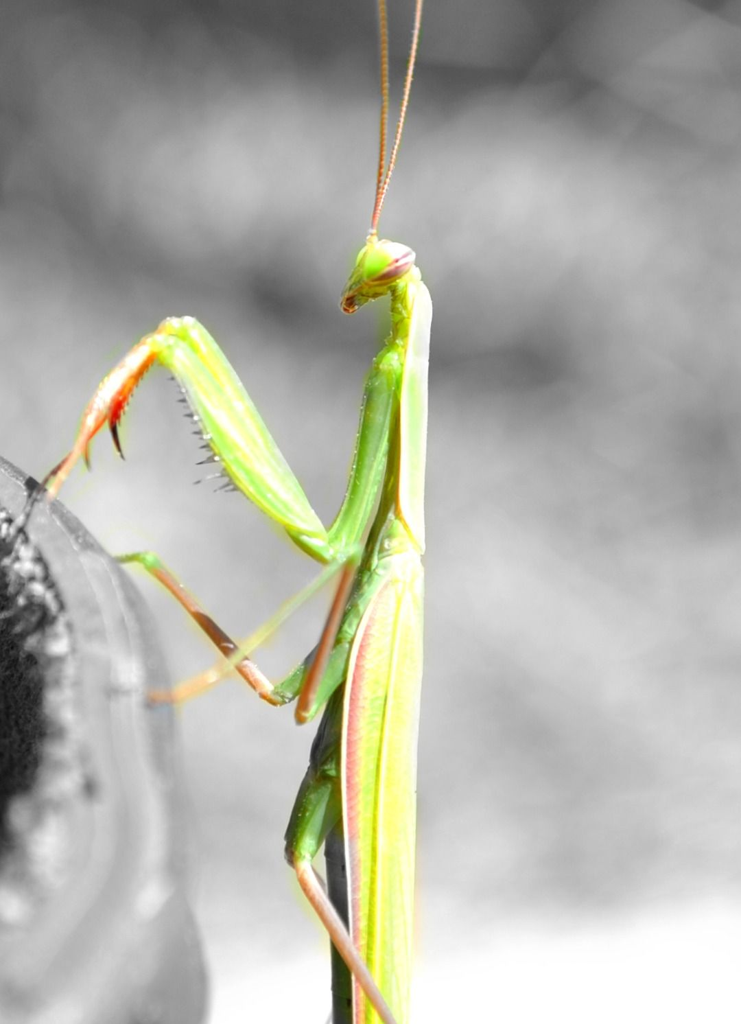 Pin By Carole Trese Swanson On Pictures Praying Mantis Country Critters Bugs And Insects