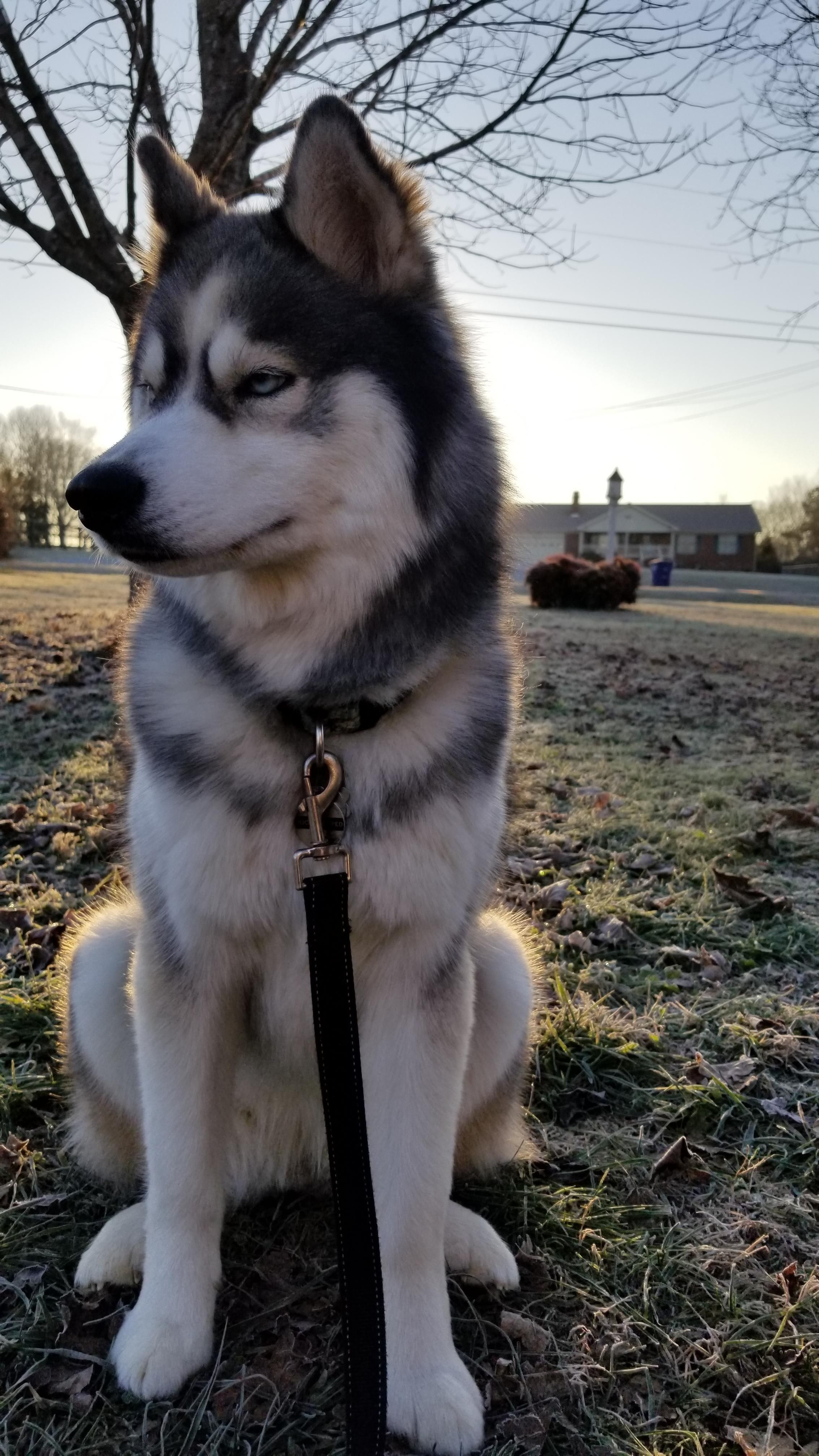 One Of The Hardest Days Of My Life I Ll Be Leaving This Majestic Beast Home While On Deployment I Ll Miss You Buddy Stay Jan Siberian Husky Husky Dogs Husky From the popular instagram/facebook account @lifewithmalamutes and imgur lifewithmalamutes. siberian husky husky dogs husky