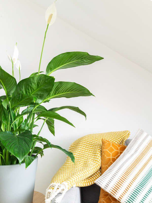 16 planting Ideas peace lily