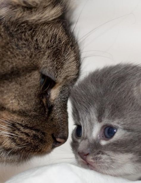 love in the eyes of mama cat & kitten