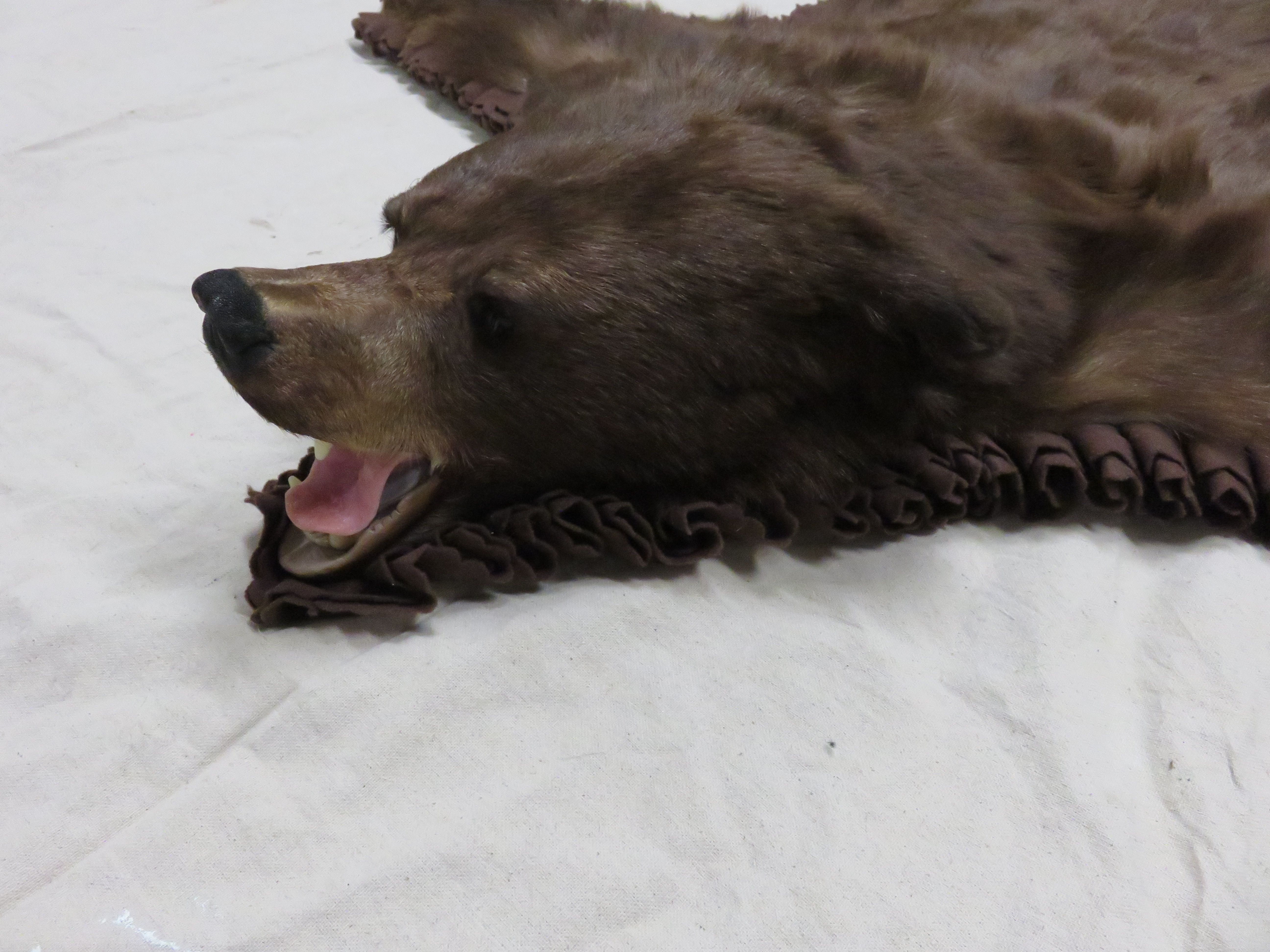 This Is One Of Several Bear Skin Rugs