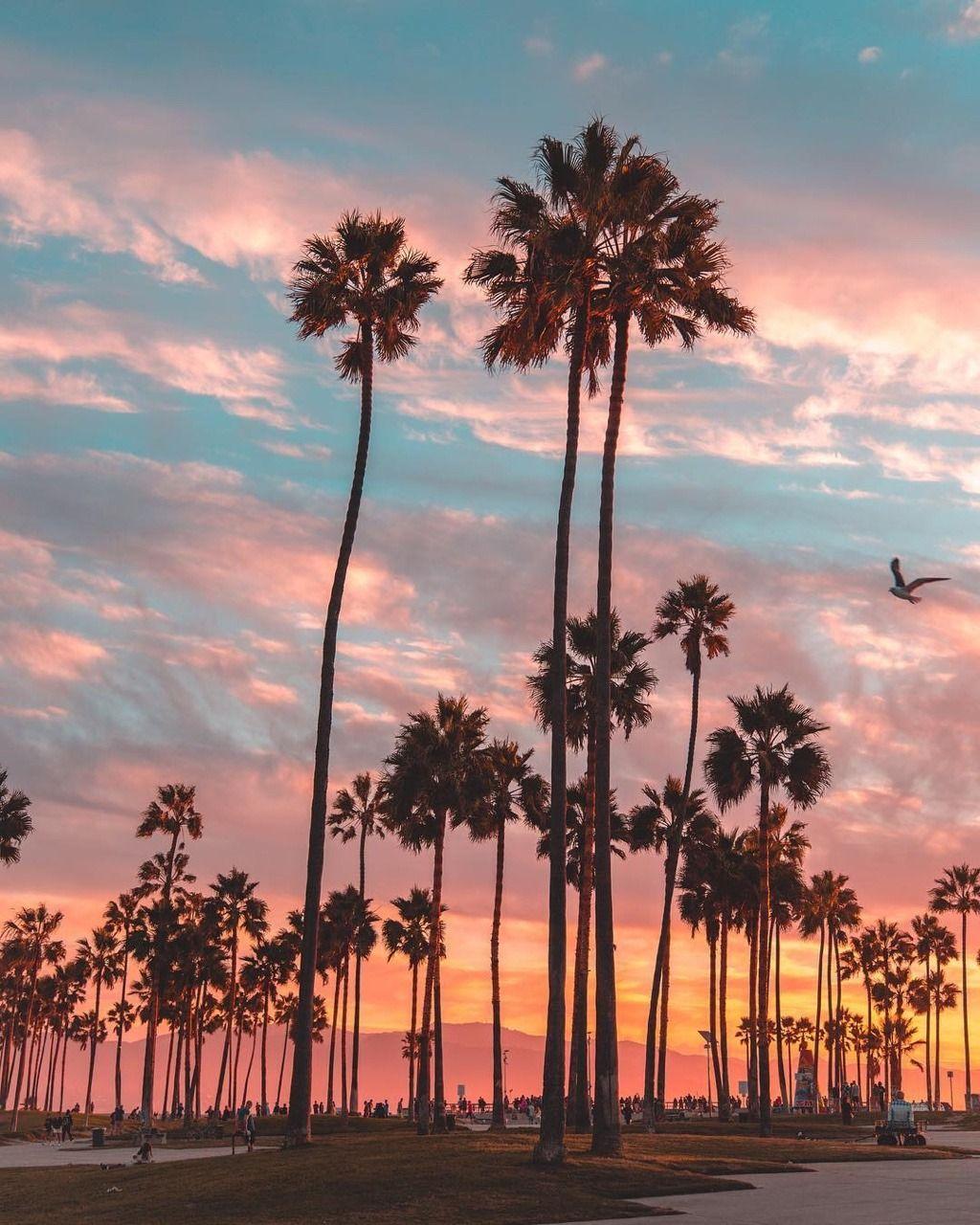 Los Angeles California By Debodoes California Palm Trees Palm