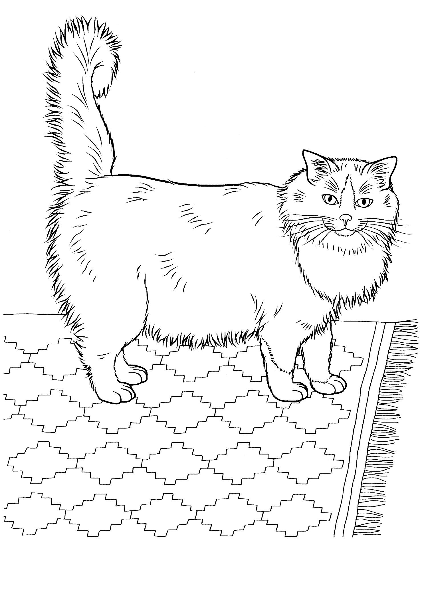 Cats 17 Cats Coloring Pages For Teens And Adults Cat Coloring Book