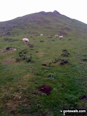 Walk Picture/View: Climbing Thorpe Cloud in The Peak District, Derbyshire, England by Brian Lunn (4) Yep, More Sheep!