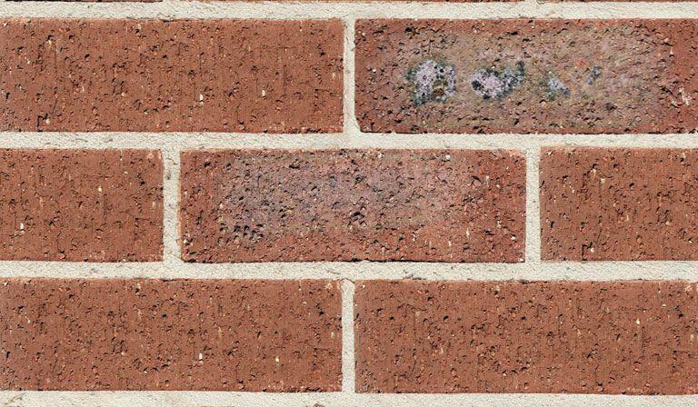 Austral Blackwood Bricks Buy Bricks Homesteading Brick