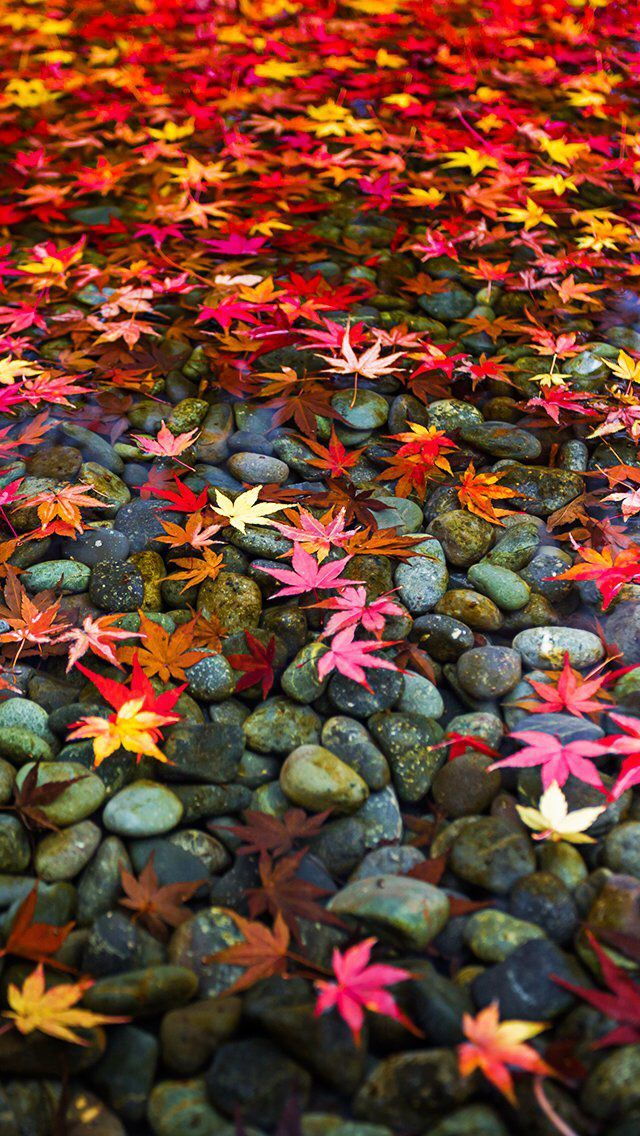 Image result for autumn leaves wallpaper for iphone ...