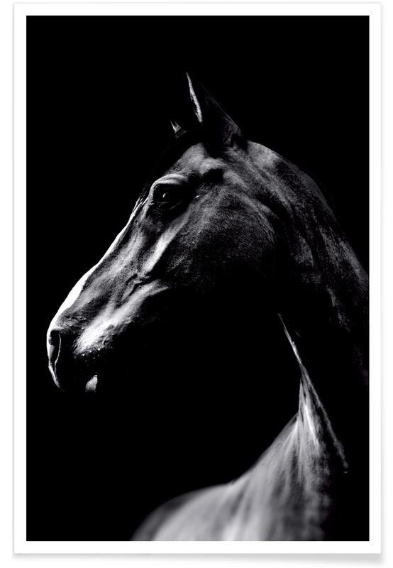 Personnalisé Cheval de dressage Box horse box trailer Voiture Autocollant équestre poney