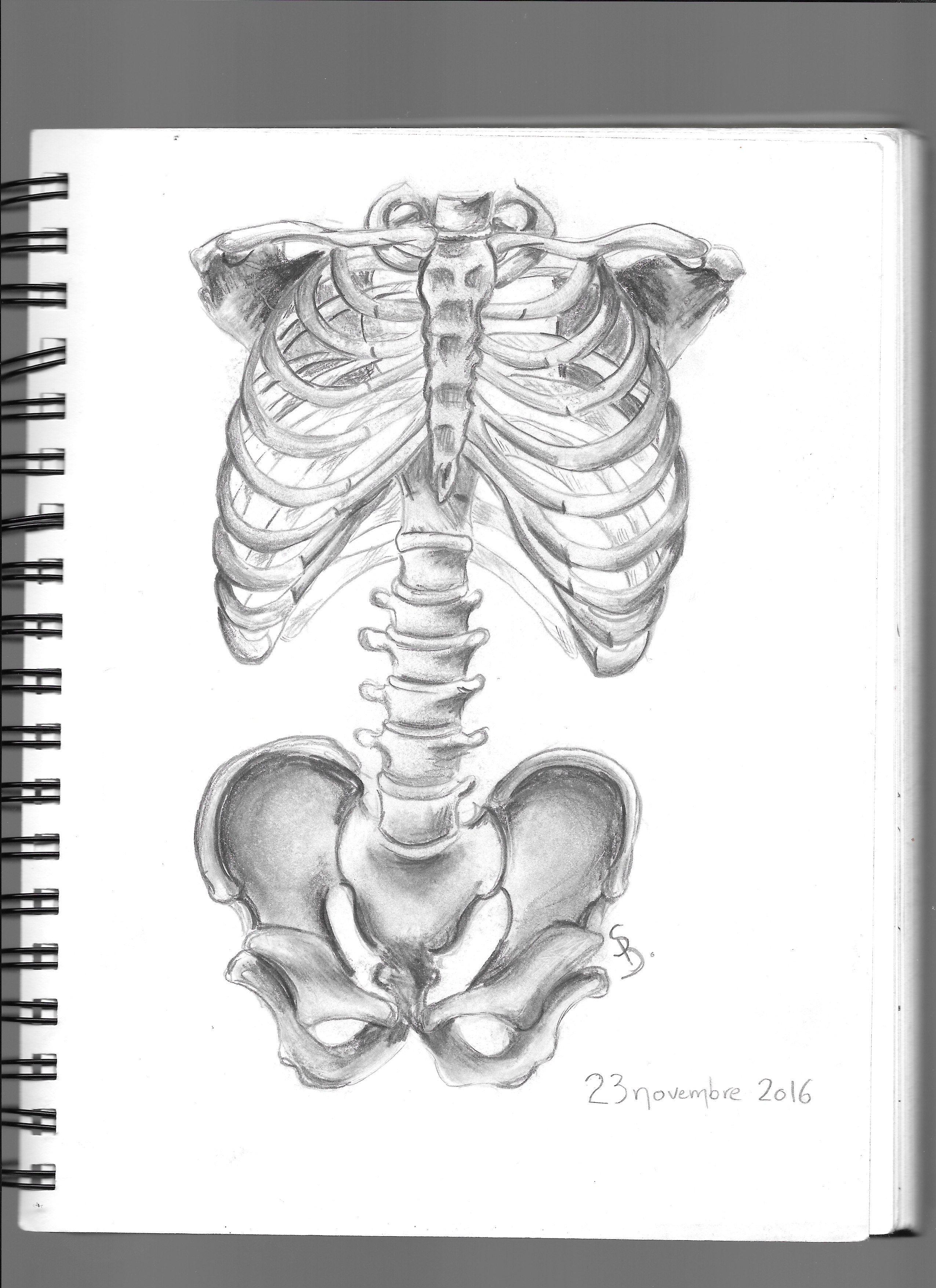 Draw Drawing anatomy bones skeleton sketch art pen pencil