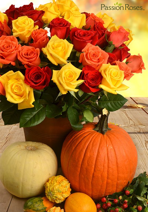 Don't forget the flowers this Thanksgiving! PassionRoses FABULOUS FALL sweetheart roses are the perfect complement to your holiday celebration, and will pleasantly surprise your holiday host.