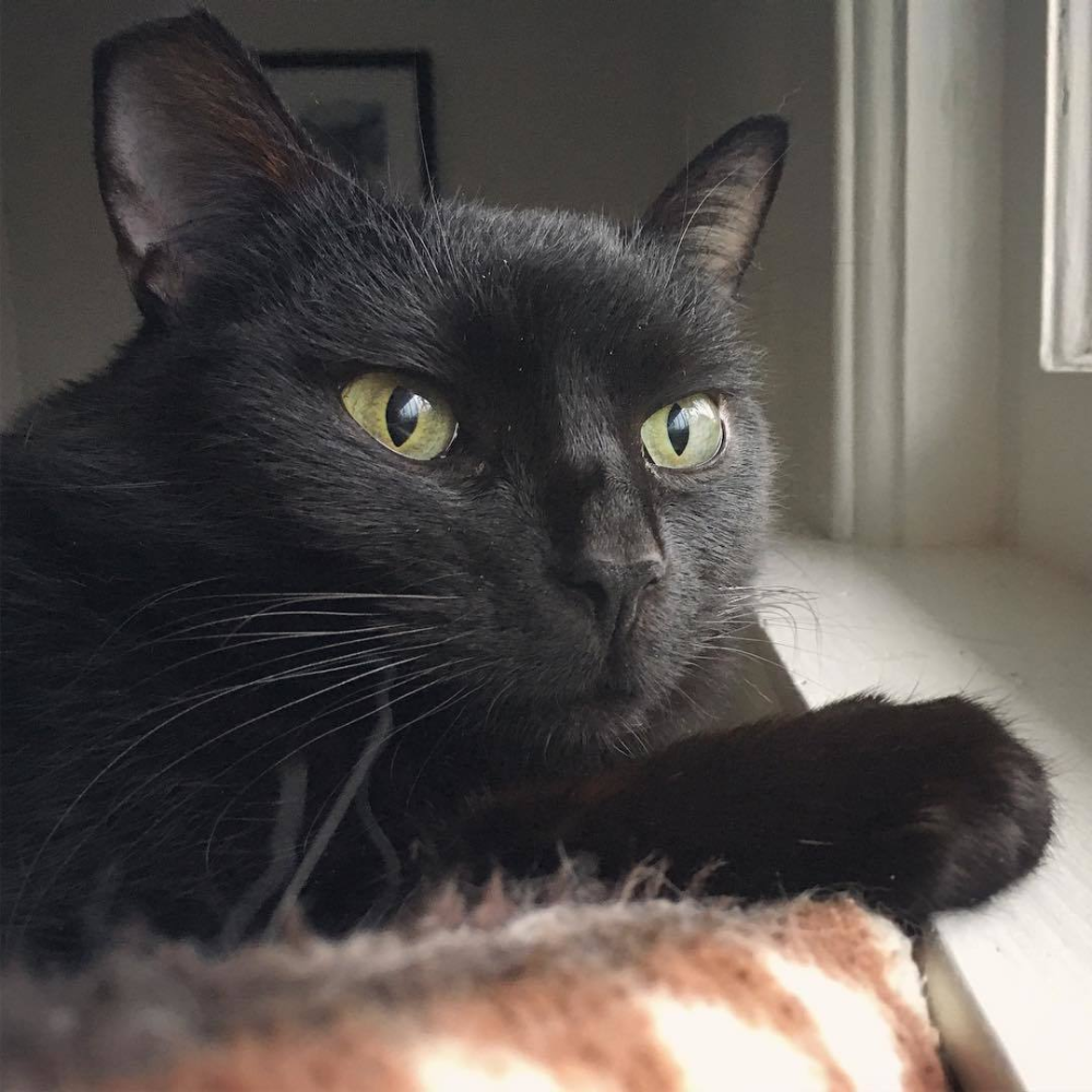 Adopt Monique On Petfinder In 2020 Cat Adoption Help Homeless Pets Quiet Cat