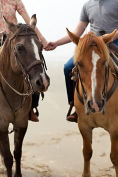 horse relationship goals - Google Search