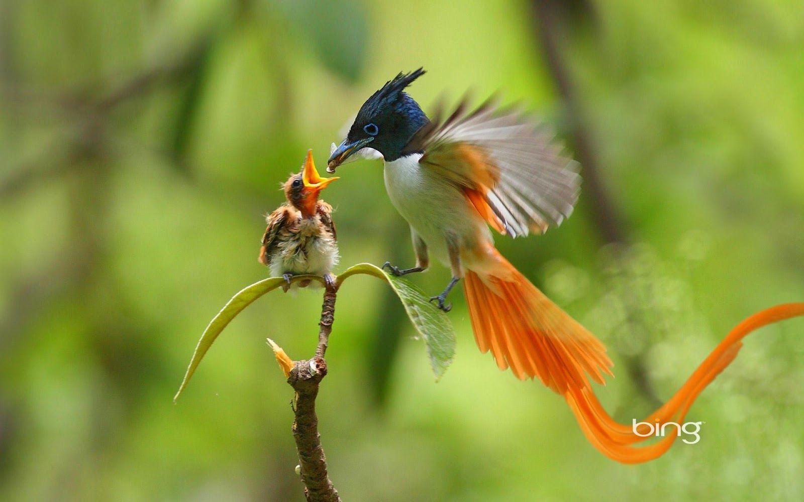Bing Animal Lovely animals,good bing images! Birds