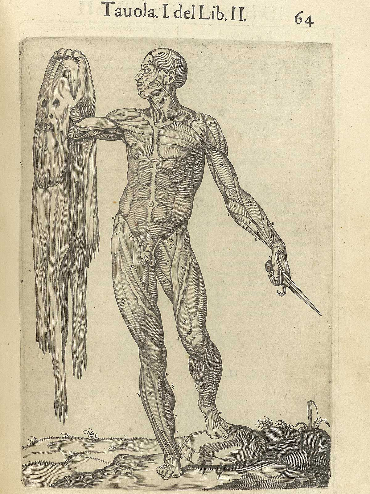 Pin By National Library Of Medicine History On Historical Anatomy