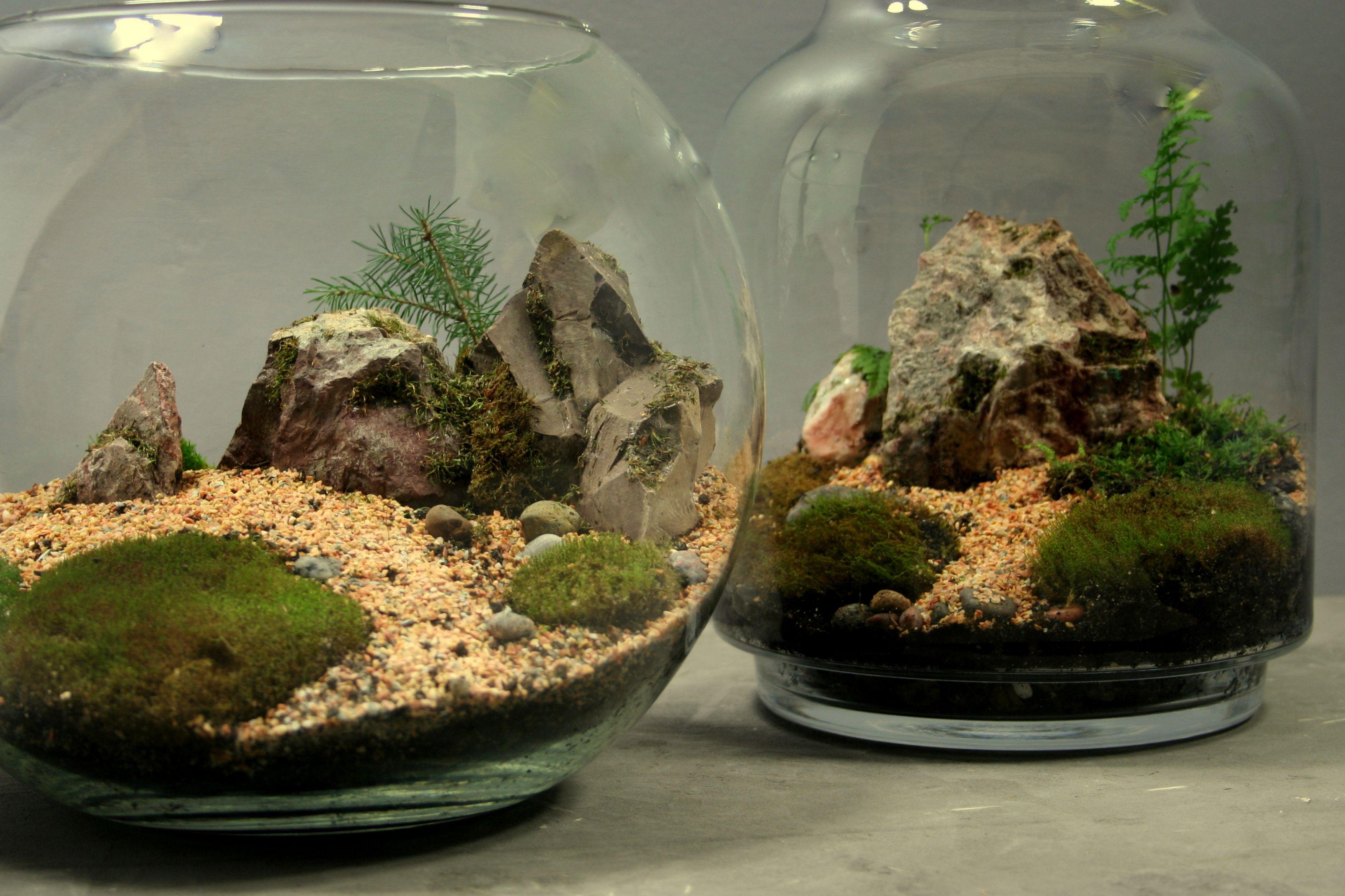 Terraria, Cactus, Stones, Garden Layouts, Succulents, Scenery, Prickly Pear Cactus,