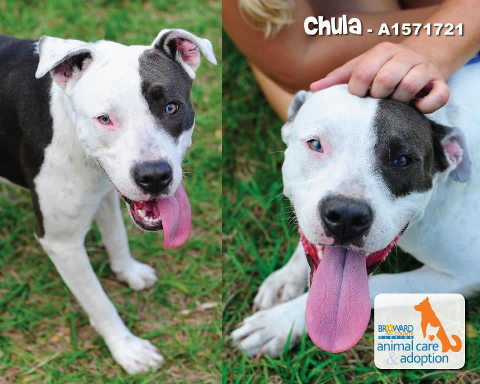 Sweet Chula is looking for a new home. Meet Chula,a loving
