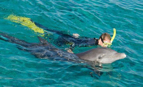 Shell Island Snorkeling With The Dolphins 25 Adult Amp 19