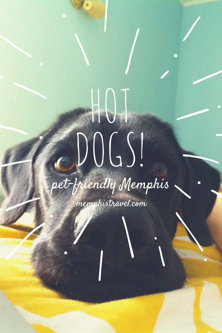 Memphis Is A Great Vacation Spot For The Whole Family So Bring Everyone Including Your Pet See Our Gui Dog Friendly Hotels Dog Friendly Vacation Dog Friends