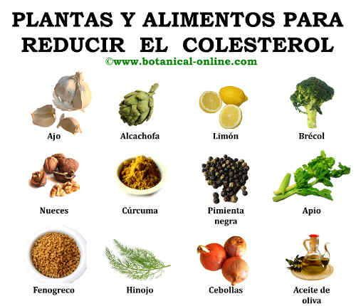 remedios naturales y plantas para el colesterol hierbas