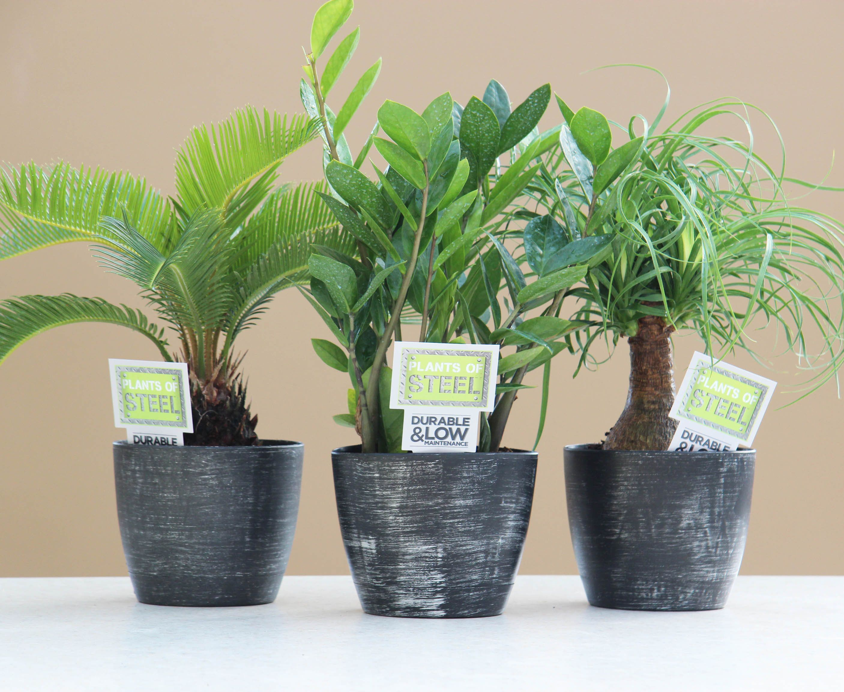 Plants of steel easy to care for house plants tropical for Indoor plants easy maintenance