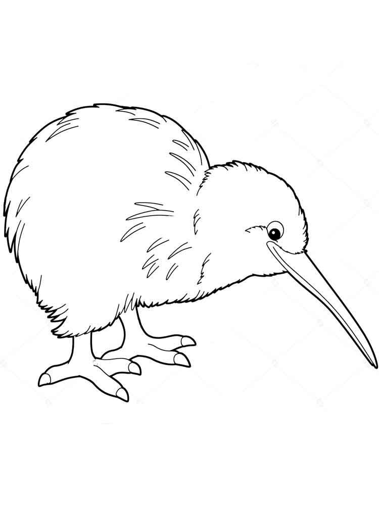 Kiwi Coloring Pages Print Kiwi Is The Name Of A Bird That Is