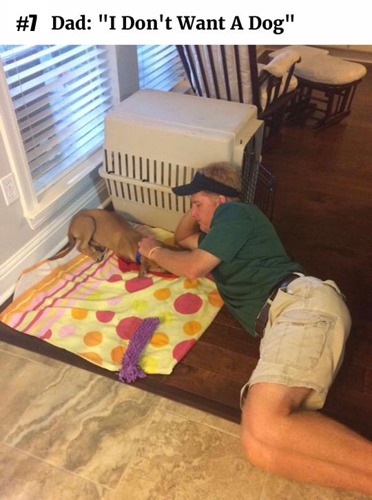10 Dad Doesn T Like Dog Pictures Giant Dogs Funny Cute Funny Animals