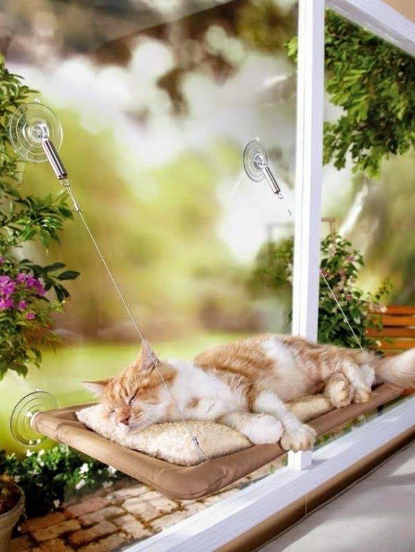 Dorminhoco