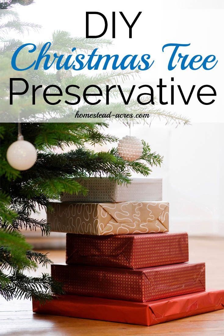 Diy Christmas Tree Preservative Recipes To Keep Your Tree Beautiful This Holiday Http S Christmas Tree Preservative Christmas Tree Water Christmas Tree Food