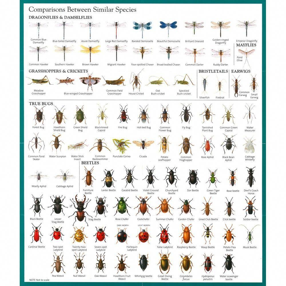 Image result for garden pest identification images