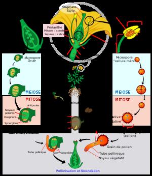 Aloe Vera Life Cycle Google Search Plant Life Cycle Plants Worksheets Life Cycles