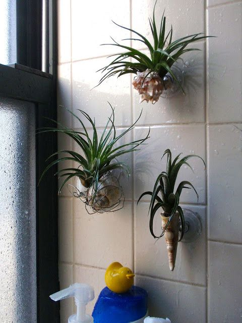 My Life In Gardens Garden Any Way You Can Shower Plant Bathroom Plants Shower Plant Decor