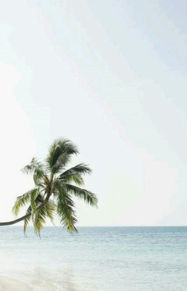 Tropical Dream Tropical Dreams In 2019 Maldives Beach