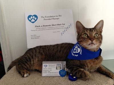 therapy cats  google search  therapy cat therapy