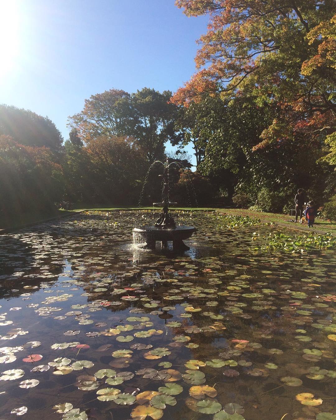 Lotus pond. #pond #lotus #water #lily #park #walk #garden #explore ...