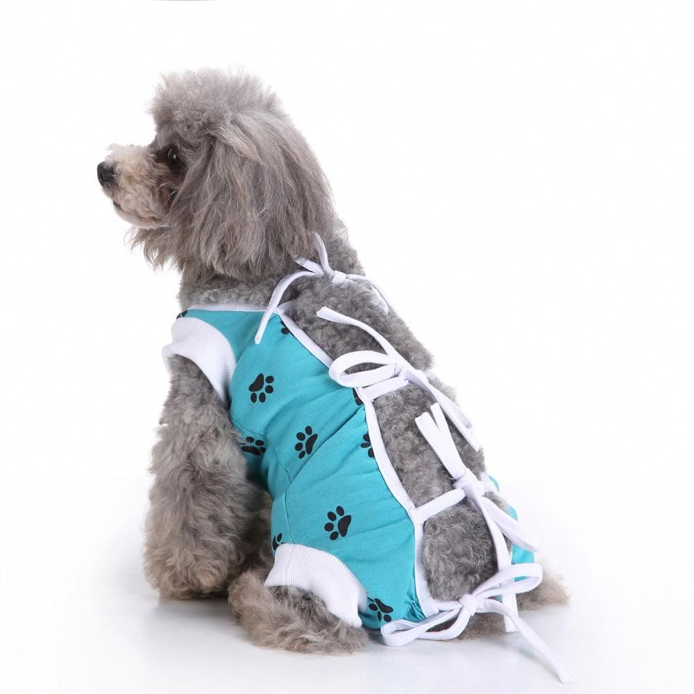 Canine Clothes See How to Find Simply The Very Best in