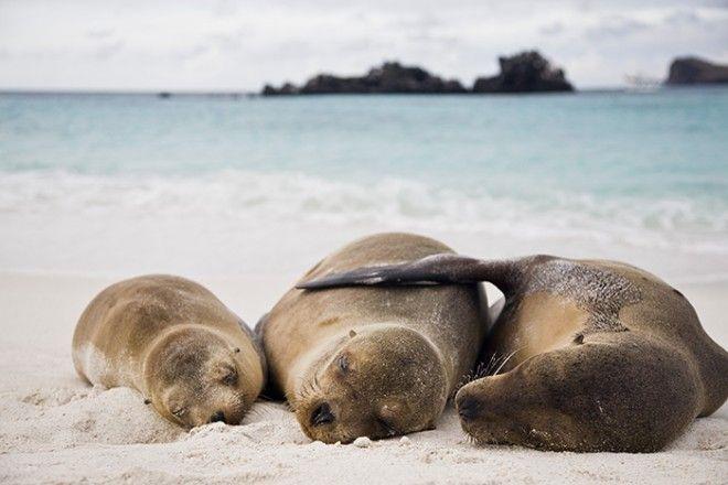 Photos-Pays du Monde 3: Îles Galapagos: un paradis sur terre - Frawsy