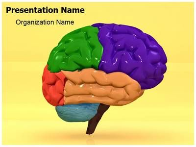 Download Our Professionally Designed Human Brain D Animated