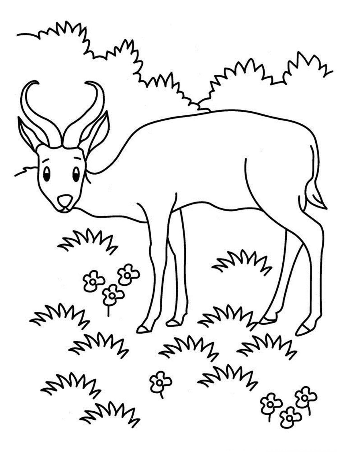 Antelope Coloring Pages Realistic Coloring Pages Mario Coloring