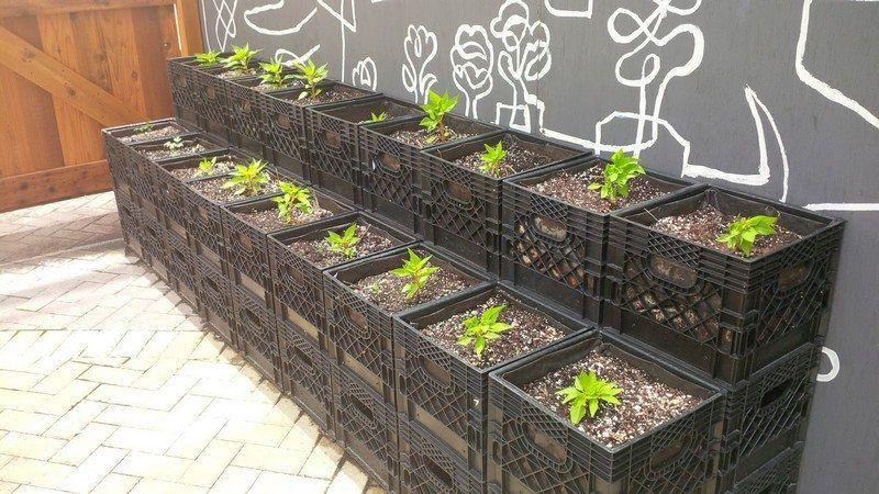 Nine Ways To Repurpose Milk Crates Plastic Milk Crates Vertical Garden Patio Container Gardening