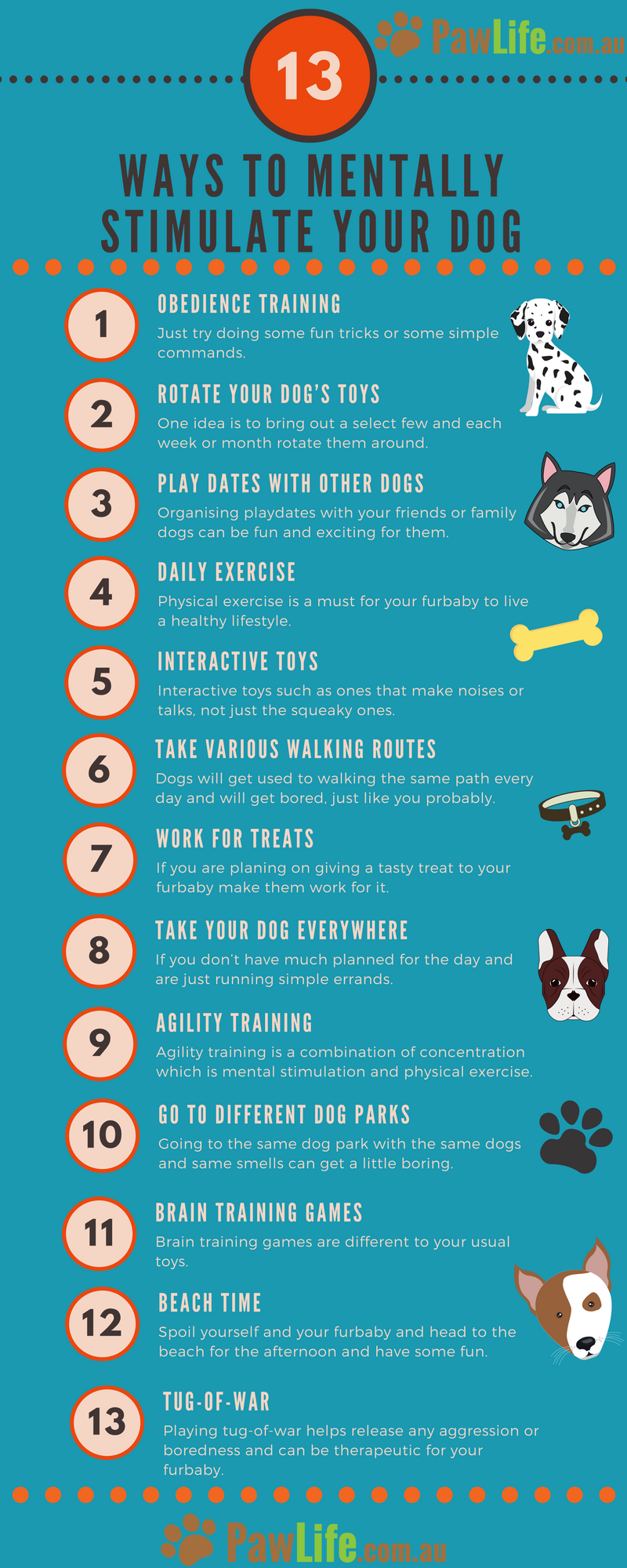 Photo of 13 Ways to Mentally Stimulate your Dog