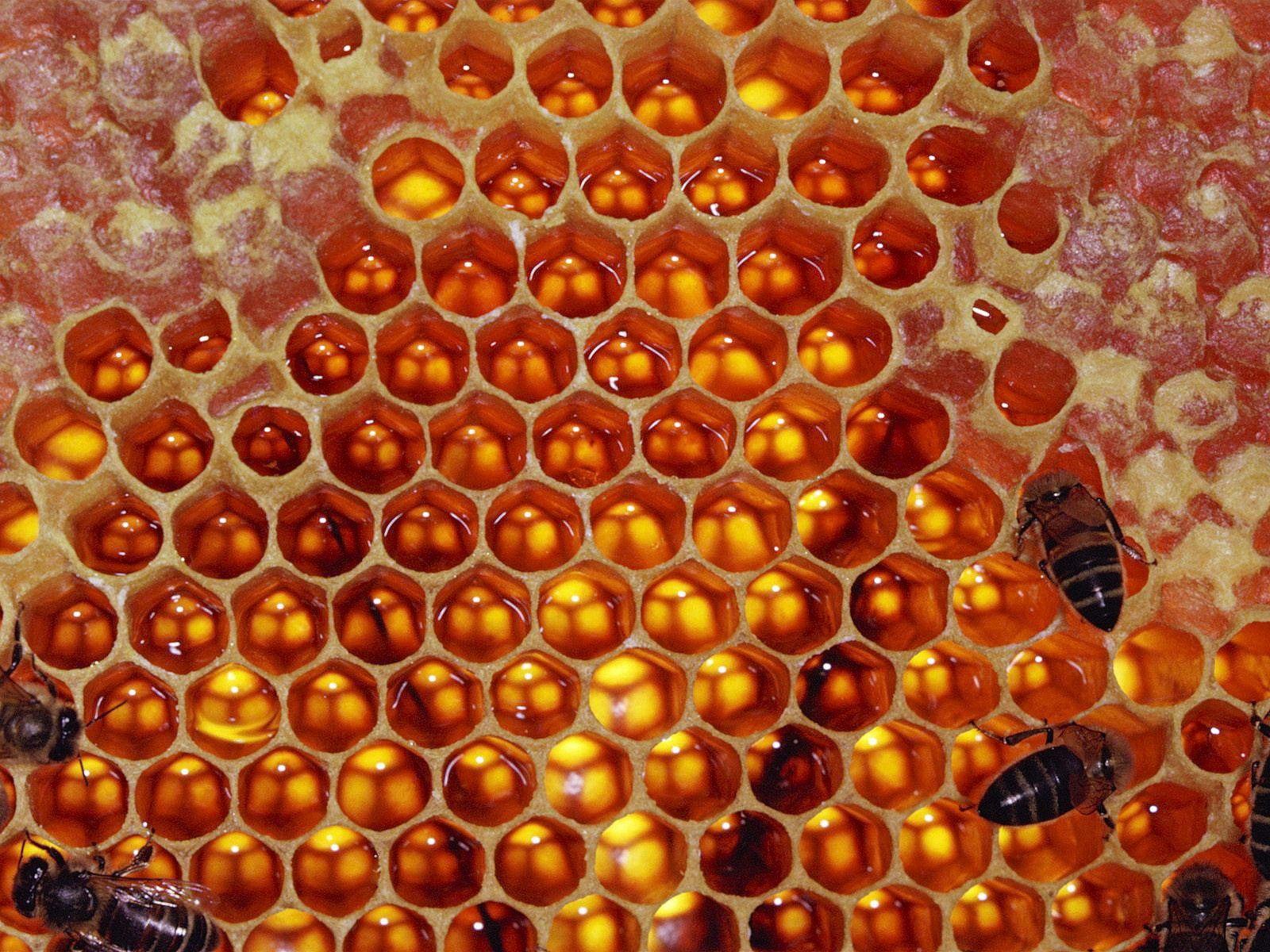 Download wallpaper bees, honey free desktop