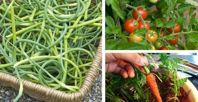 The 16 Best Healthy Edible Plants To Grow Indoors With 400 x 300
