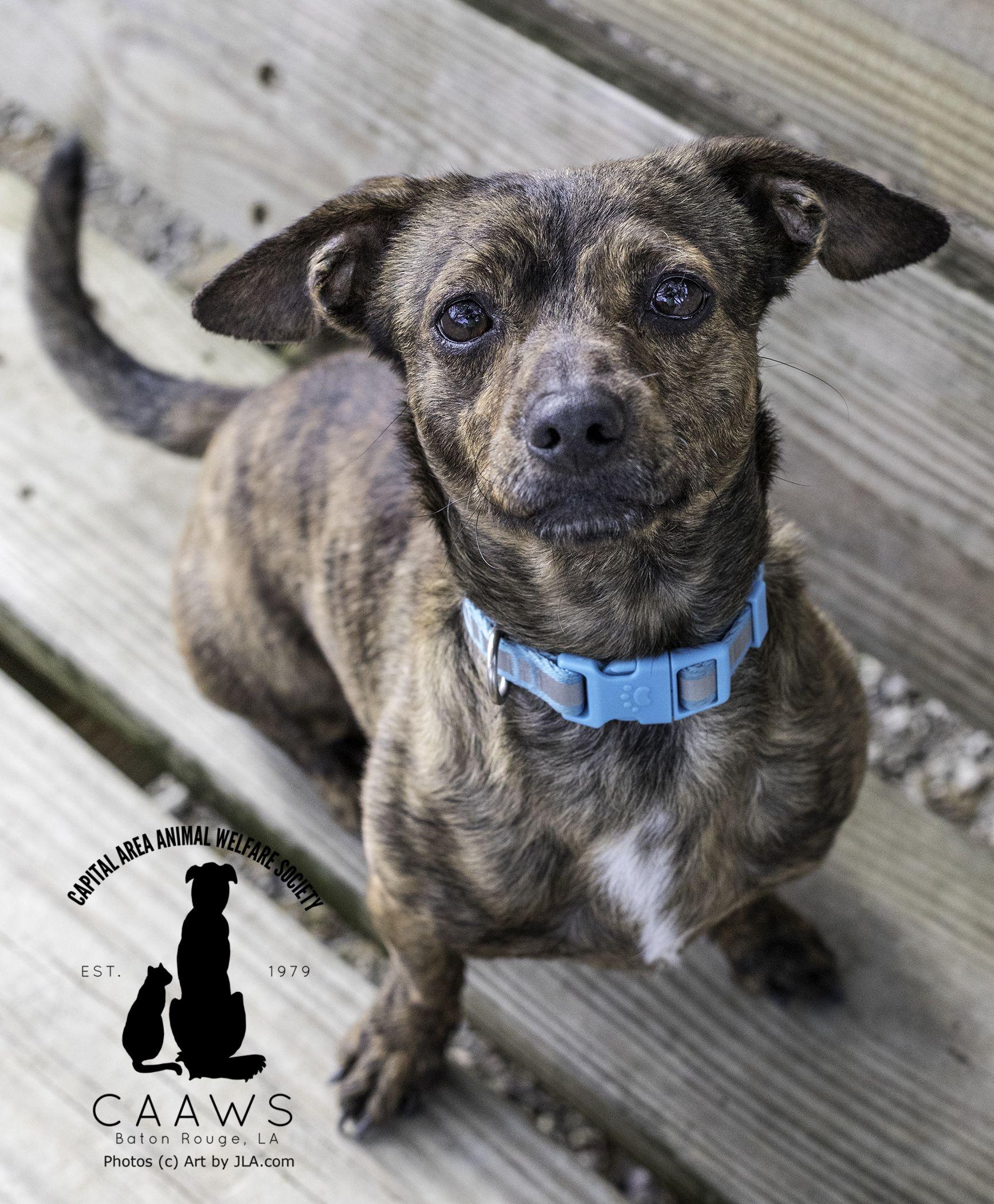 Adopt Squeeker on Animal welfare society, Dogs, Animals