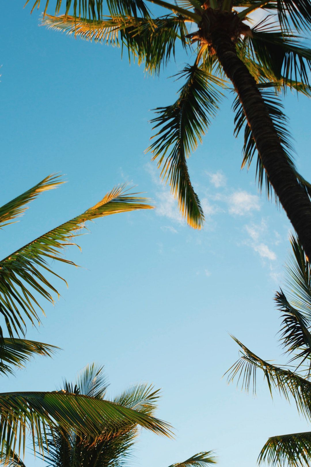 Hawaii Palm Tree Summer And Summer Vibe Hd Photo By Jordan Mcqueen Jordanfmcqueen On Unspla Tropical Wallpaper Wallpaper Iphone Summer Tropical Background