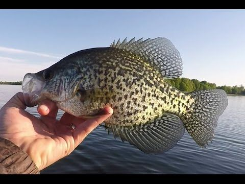 The Final Showdown Last Crappie Bluegill Fishing Video Of The Spring Animais