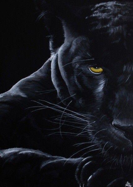 Panther Black Panther Cat Panther Cat Jaguar Animal