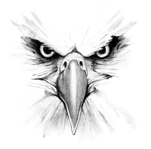Eagle Head Pencil Drawing The eagles, eagles head, | Art ...