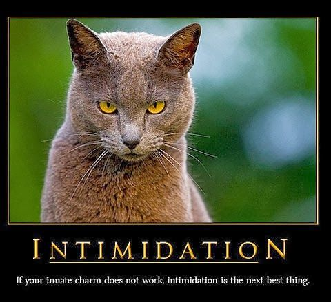 Cute And Funny Cat Posters Cat Posters Funny Posters Kittens Funny