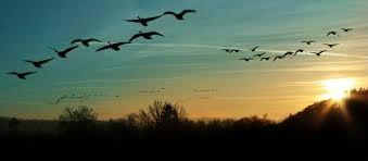 طيور تطير في السماء بحث Google Photo Editing Stock Images Image