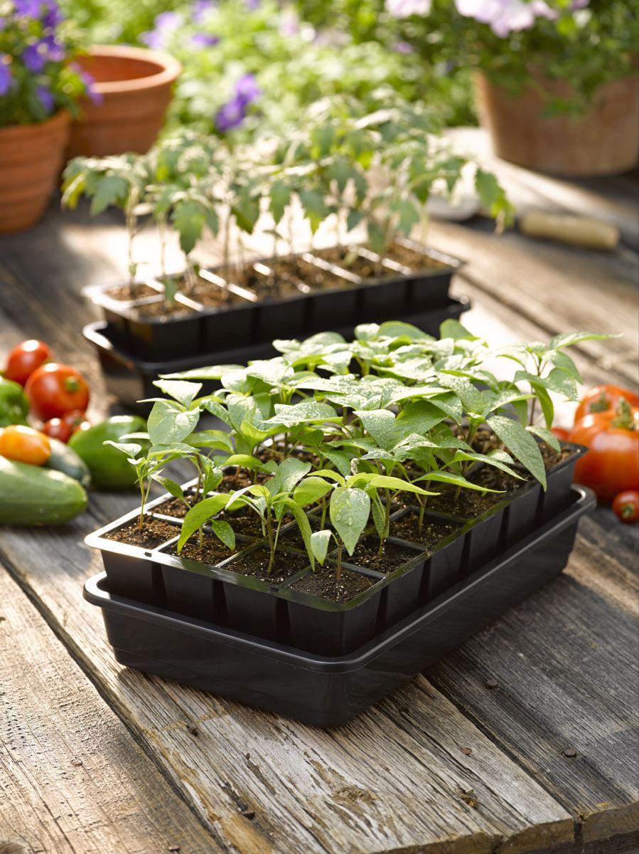 Growease Seed Starter Kit Free Shipping Gardener S Supply Seed Starter Kit Seed Starter Tomato Seedlings